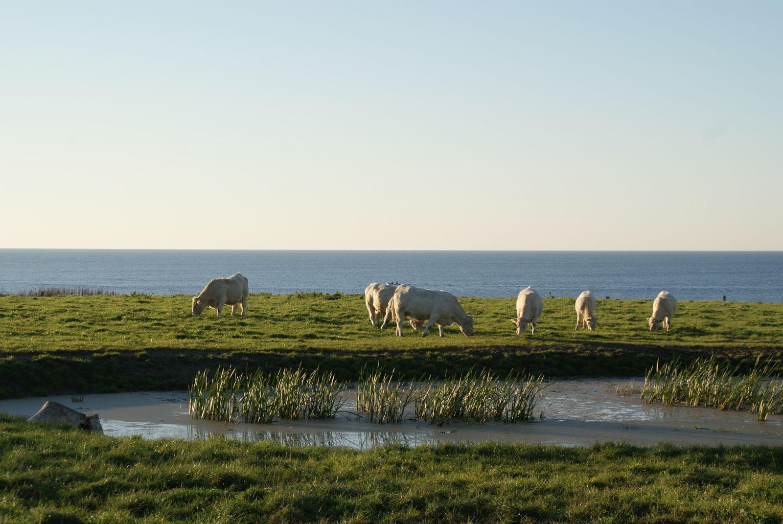 Grasland mit Meerblick